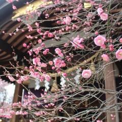 牛天神北野神社 初午祭限定御朱印 / 東京都文京区